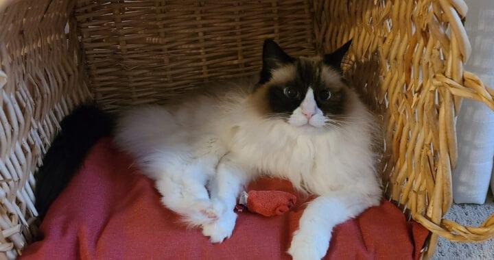Cat Pause with Jasmine